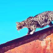 Petpointer trova i gatti smarriti
