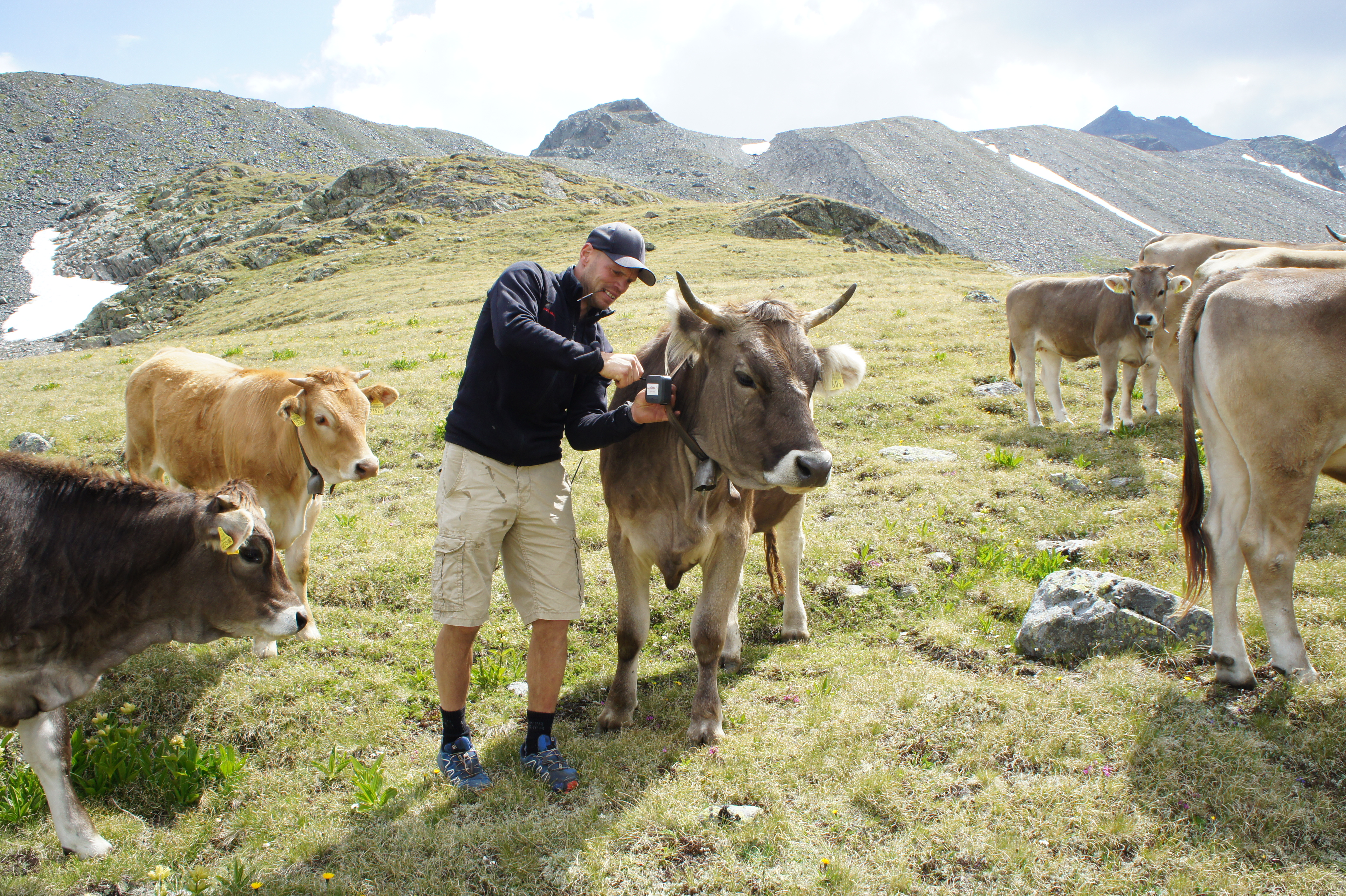 Géolocalisateur IoT pour vache