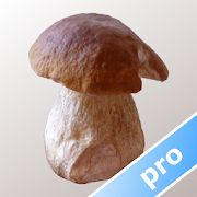 Application d'identification des champignons Myco Pro