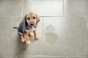 Surveiller le chien avec SmartLife
