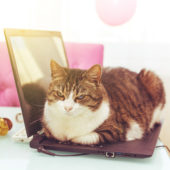 Un chat allongé sur un ordinateur portable